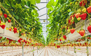 Air humidification in the agricultural industry